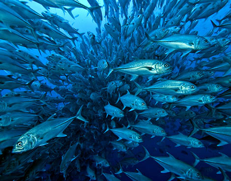 http://galapagosconservation.org.uk/wp-content/uploads/2014/01/Conservation-Overfishing-©-Jonathan-Green.jpg