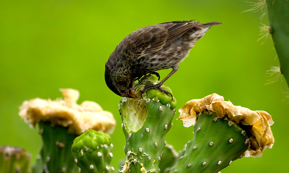 Wildlife, Finch and Cactus © Johannes Kempf