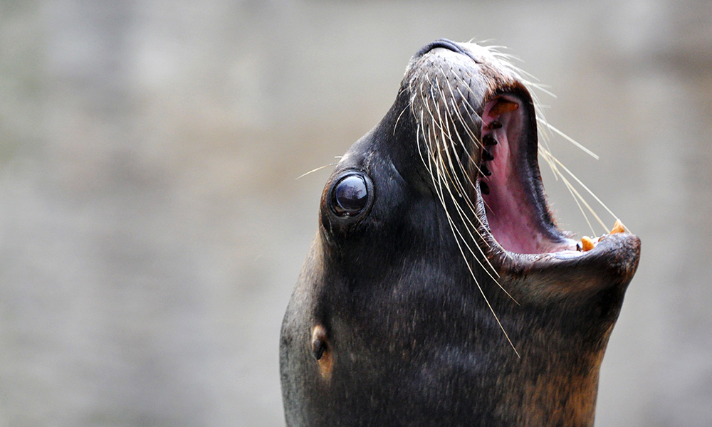Wildlife, Sea Lion