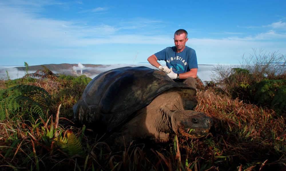 Projects, Giant Tortoise Tagging © Christian Ziegler