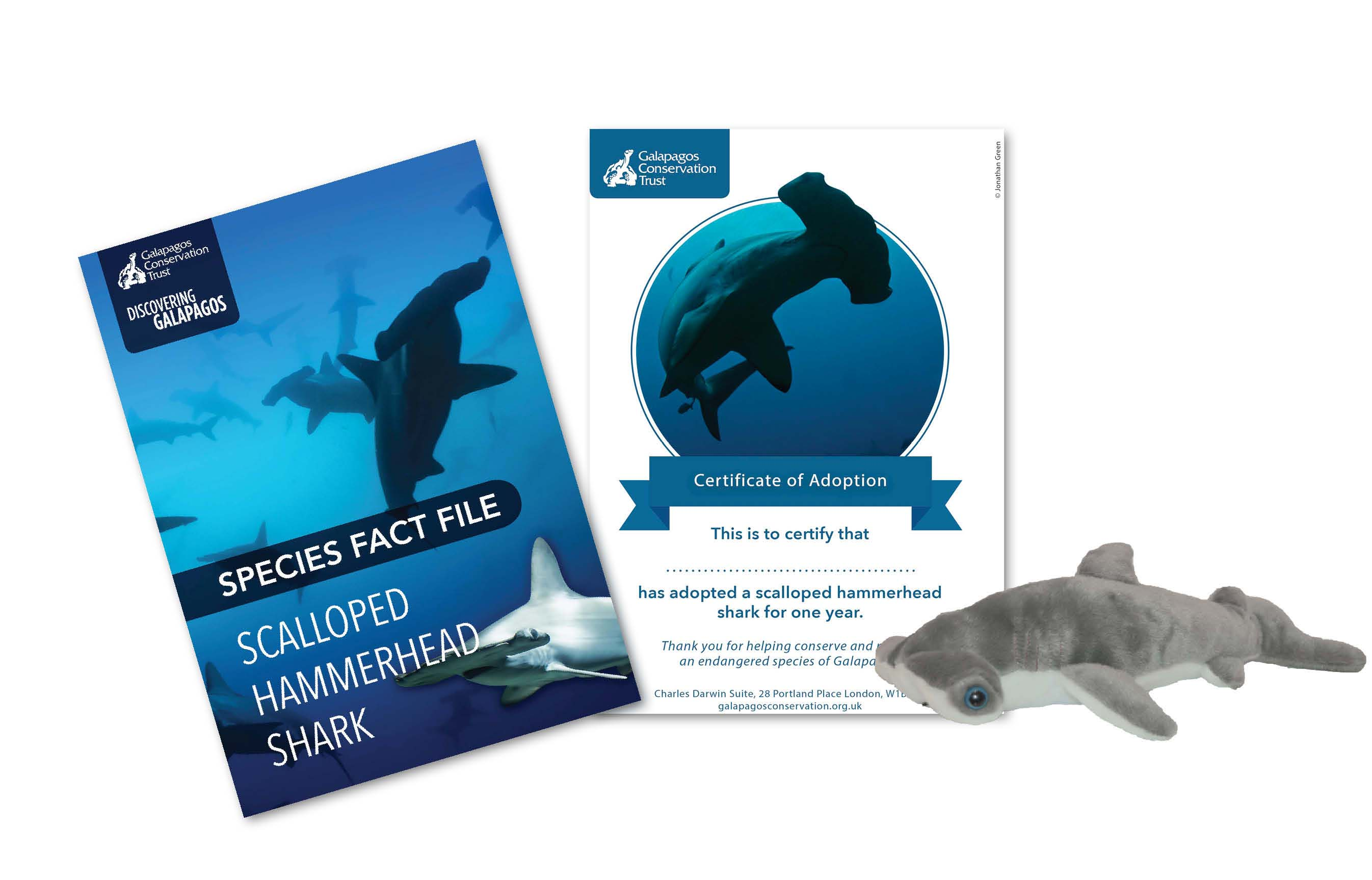 hammerhead_website