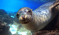 Wildlife, Sea Lion, Thumbnail