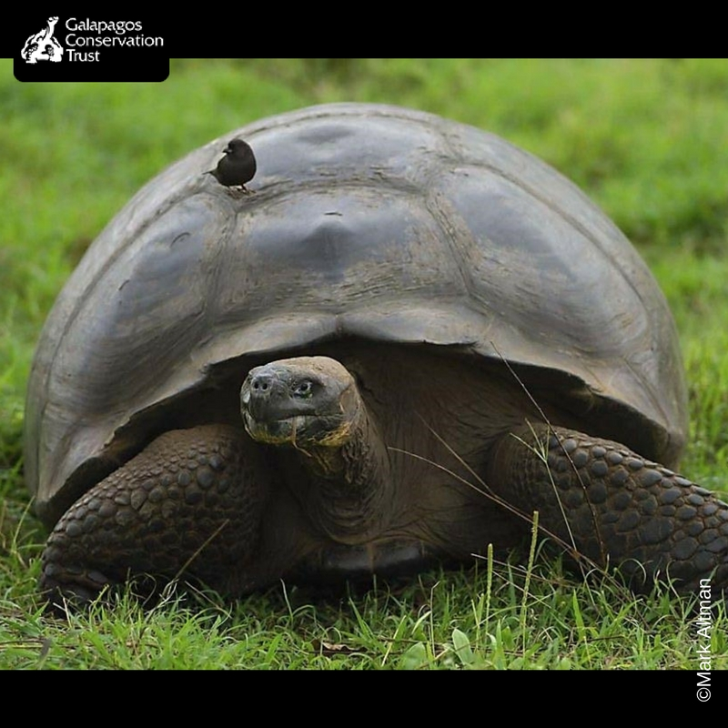 Symbiotic Relationships In Galapagos Galapagos Conservation Trust