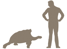 Giant Tortoise Size Comparison
