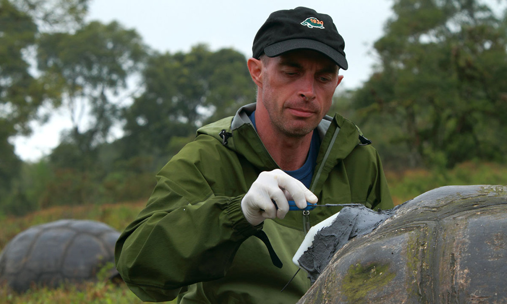 Projects, Steve Blake tagging tortoise © Christian Ziegler