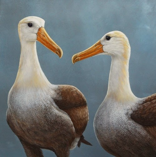 waved-albatross-home © Robert E Fuller