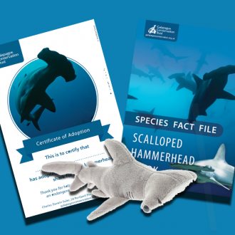Hammerhead shark - species adoption