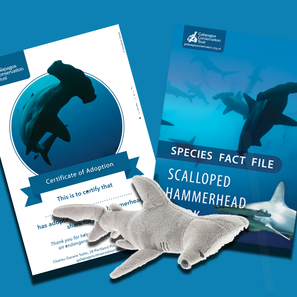 Scalloped hammerhead species adoption pack