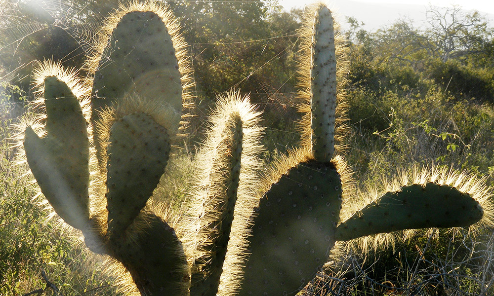 Wildlife, Opuntia ©Kate Green