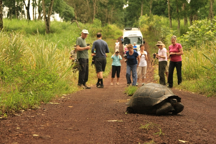Galapagos People: Tourists and giant tortoise