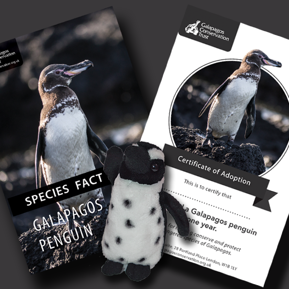 Galapagos Penguin Adoption Pack - Postal