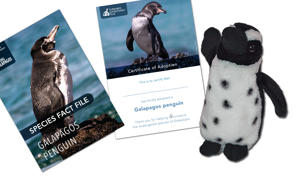 Penguin Adoption Pack