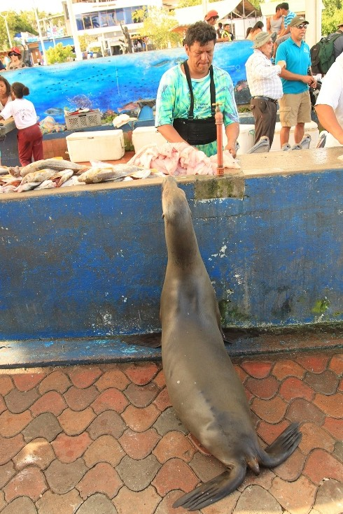 Sea Lion and locals III Fuller May2014