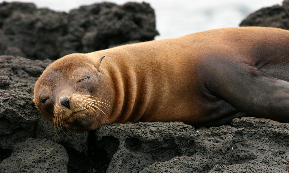 Wildlife, Fur seal ©Vanessa Green