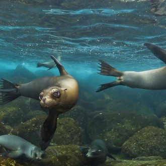 Sea lions © Tracey Jennings