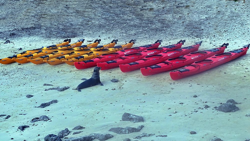 Overall 1st place - Sea lion and kayaks by © Lutz Bunger (also Man in the Archipelago 1st Place)