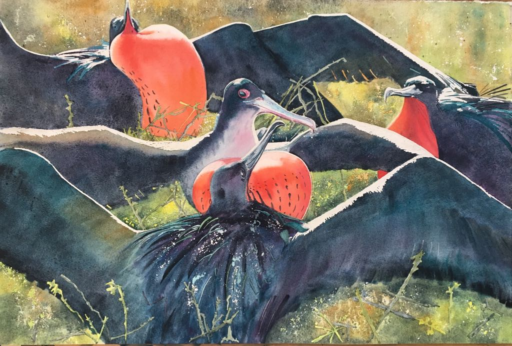 'Four Great Frigatebirds, Galapagos' - Watercolour by Mel Collins and silent auction prize- Oceans Garden Party 2018