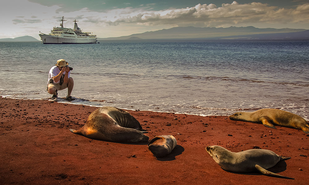 Photographer and sea lions - Jerry Chinn
