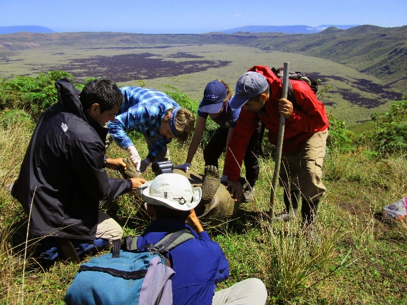 The team sampling a tortoise at the edge of the crater by Photo © Surya Castillo, CDF
