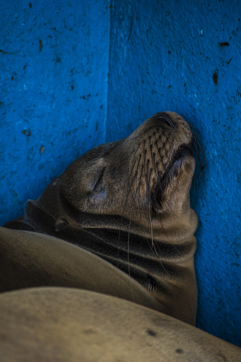 Sleeping sea lion - Jake Roberts