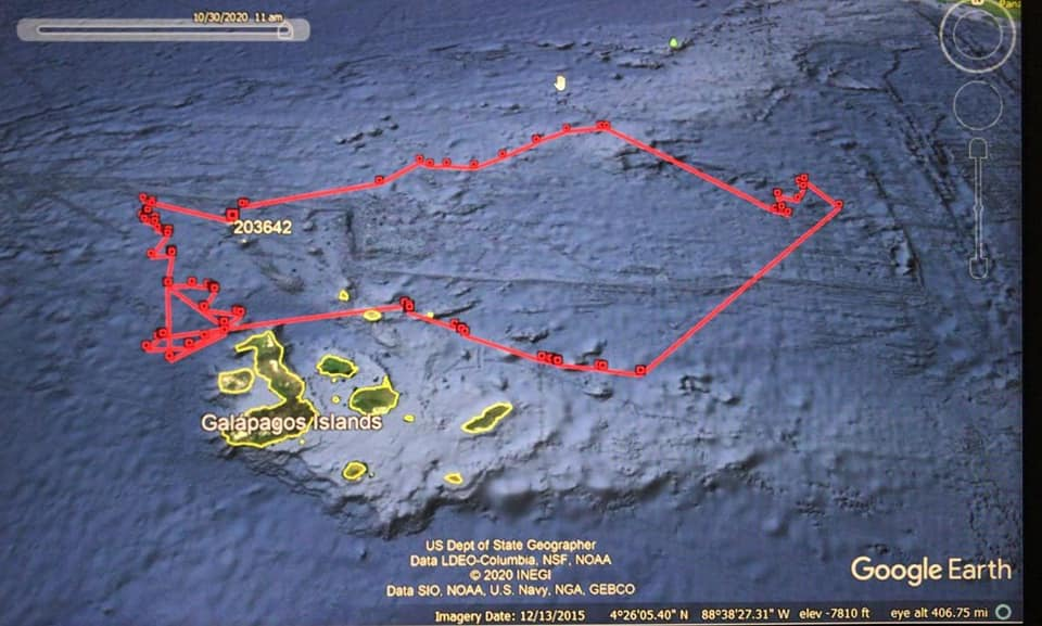 This map shows the tracks of Nemo the whale shark's epic journey, leaving Darwin Arch and 80 days later returning to the Galapagos Islands.