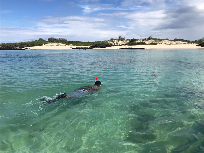 Snorkelling Looking for juvenile sharks